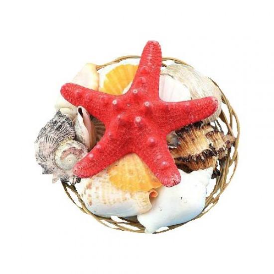 Dekoratif Deniz Kabuğu Sepeti Çap 10 cm Akvaryum Malzemeleri