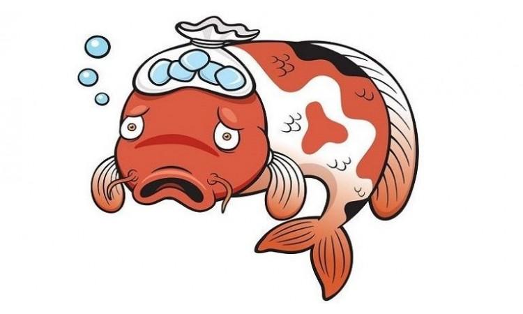 Balık Hastalıkları ve Tedavileri