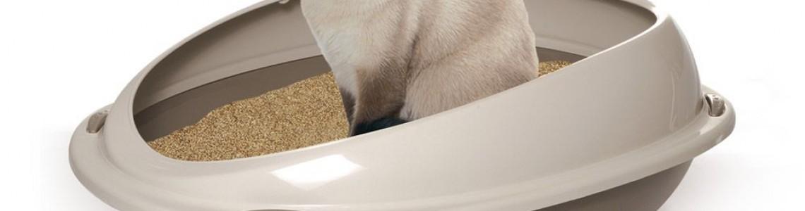 Kedi Kumları & Tuvaletler