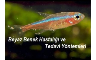Balık Sağlığı İçin Akvaryum Koşulları