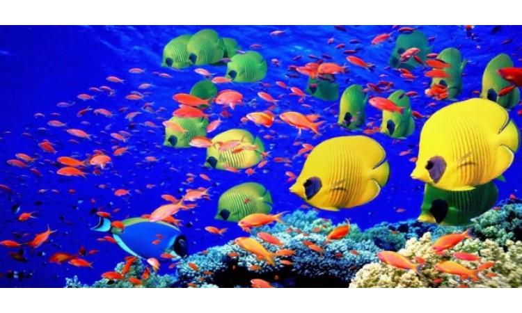 Beslenecek Balık Seçimi ve Uyumlu Balık Türleri