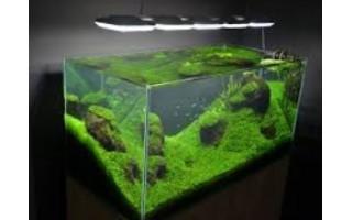 Akvaryumda Canlı Bitkilerin Yetiştirilmesi ve Bakımı