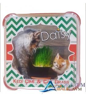 Daisy Kediler İçin Doğal Kedi Çimi