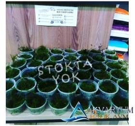 Taiwan Moss Cup